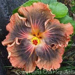 Moorea Timeri Beauty