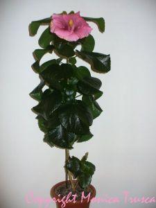 027-planta din seminte-prima floare - la 10 luni de viata