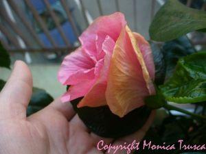 029-prima floare