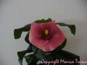031-prima floare ,deshisa complet