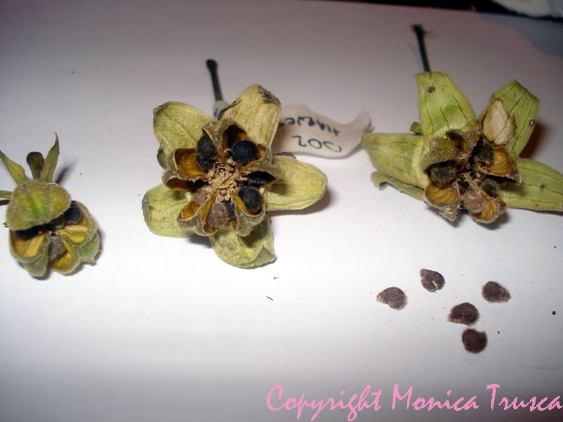 how to use seed pods