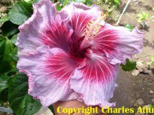 12Moorea Charles Heart
