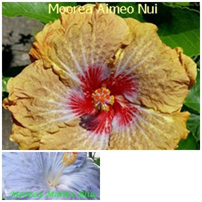 Aimeo Nui