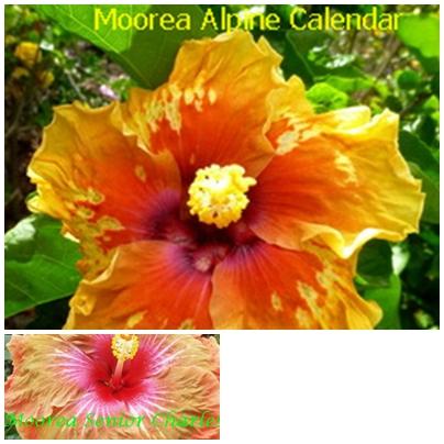 Alpine Calendar