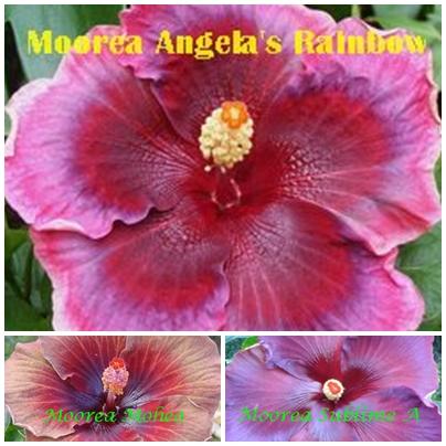 Angela's Rainbow