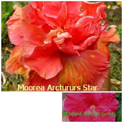 Arcturus Star