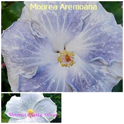 Aremoana