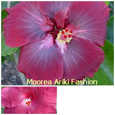 Ariki Fashion
