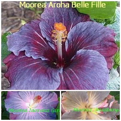 Aroha Belle Fille