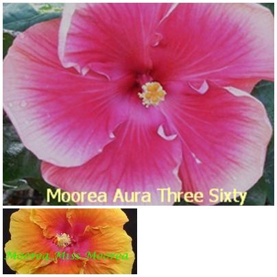 Aura Three Sixty