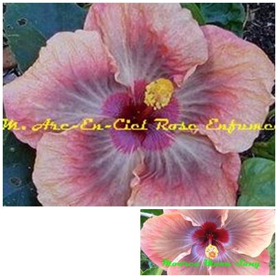rose enfumee