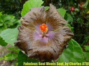 1 Fabulous Soul Meets Soul