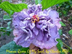 1 Moorea Queen of My Soul