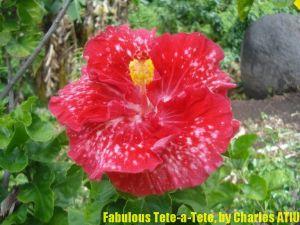 12-Fabulous Tete-a-Tete