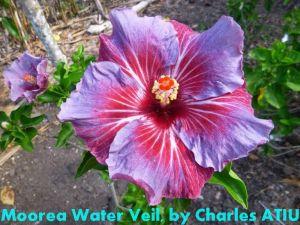 17 Moorea Water Veil