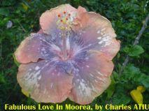18-Fabulous Love in Moorea
