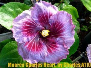 2 Moorea Charles Heart