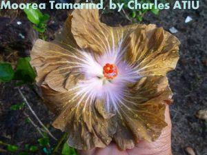 21 Moorea Tamarind