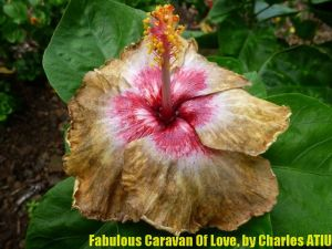 24Fabulous Caravan Of Love