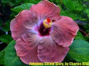 29 Fabulous Untold Story