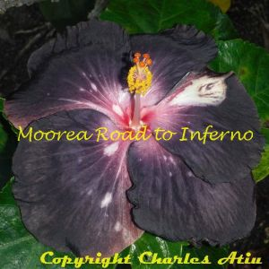 3 Moorea Road To Inferno