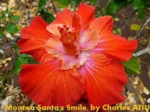 3 Moorea Santa's Smile