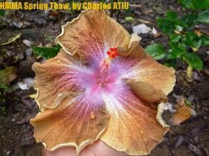 4 HMMA Spring Thaw