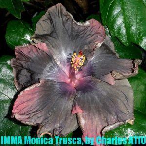 4 IMMA Monica Trusca