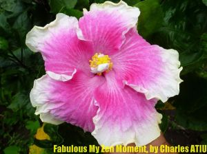 5 Fabulous My Zen Moment