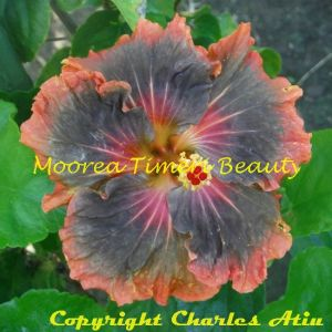 6 Moorea Timeri Beauty