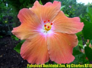 7 Fabulous Auckland Zoo