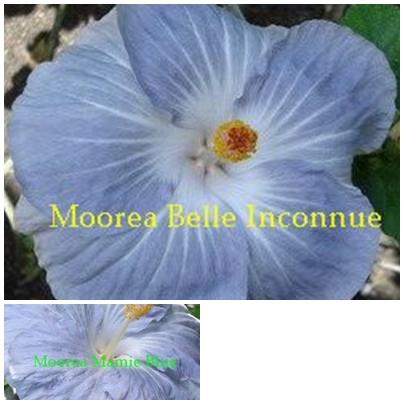 Belle Inconnue