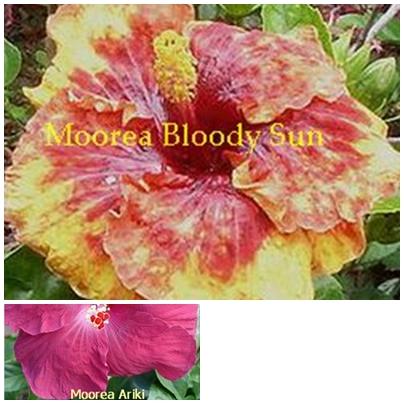Bloody Sun