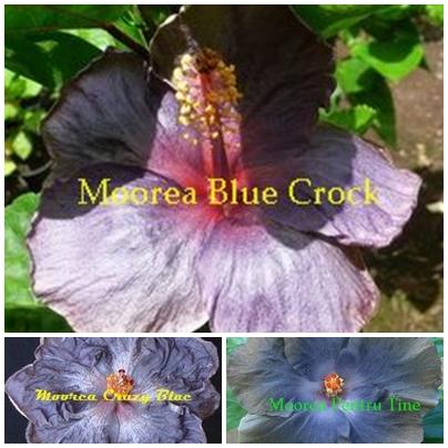 Blue Crock