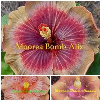 Bomb Alix