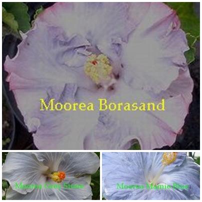 Borasand