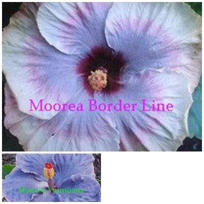 Border Line