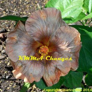 KMMA Changes
