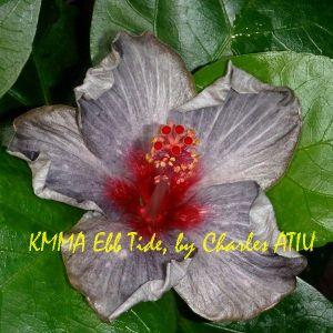 KMMA Ebb Tide