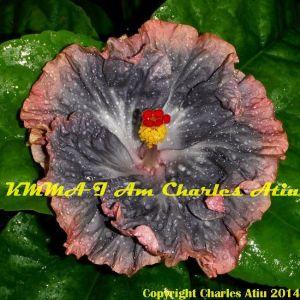 KMMA I Am Charles Atiu