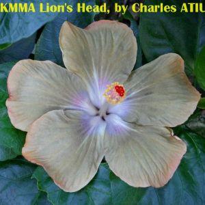 KMMA Lion's Head