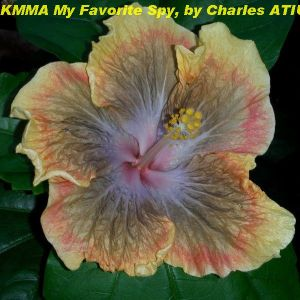 KMMA My Favorite Spy