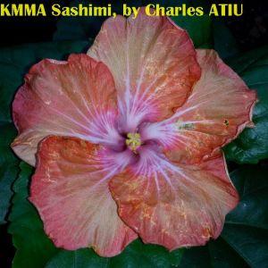 KMMA Sashimi