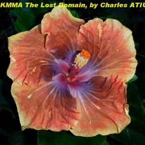 KMMA The Lost Domain