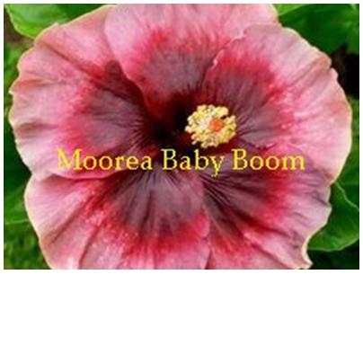 M. Baby Boom