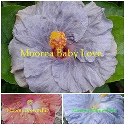M. Baby Love