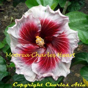 Moorea Charles Heart