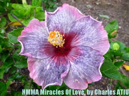 13-HMMA Miracles of Love