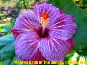 13 Moorea Balm Of The Soul