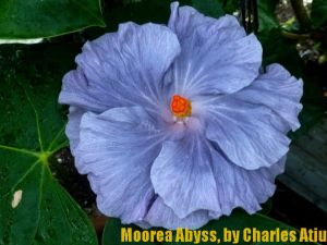 16 Moorea Abyss